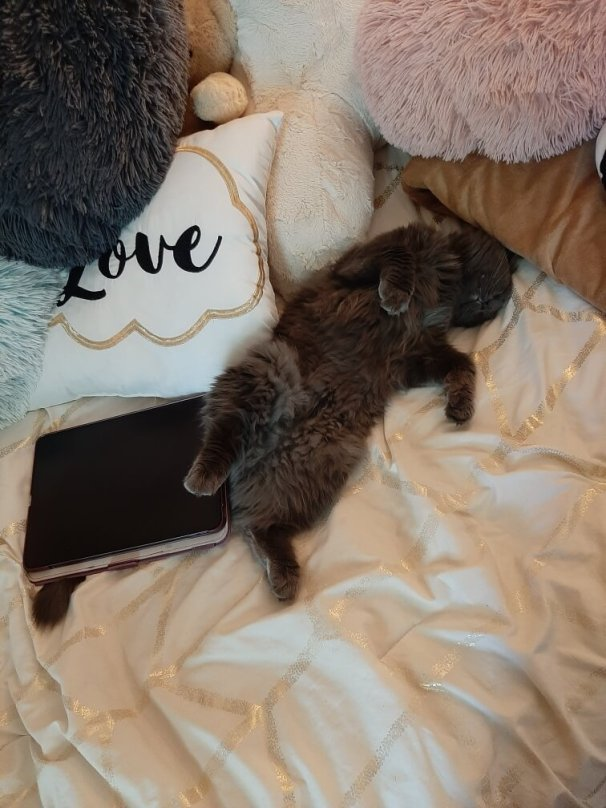 very cute cat on bed