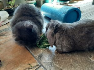 very cute cat and bunny eating greens together
