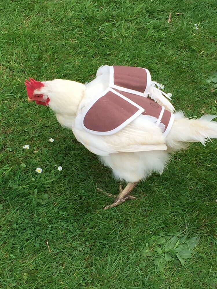 Chicken poultry saddle wing protection fleece lined medium//apron//waterproof//hen