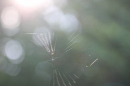 The tinest spider spinning its web