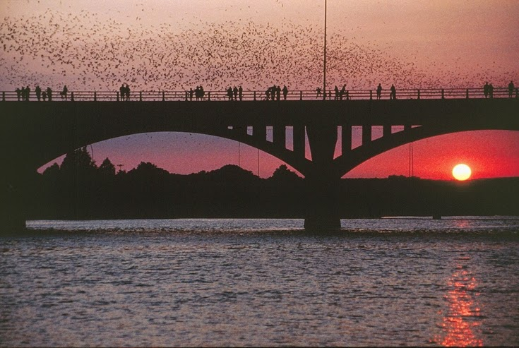 Bats at Sunset