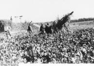 Westwall, bei Barbelroth, getarntes Geschütz