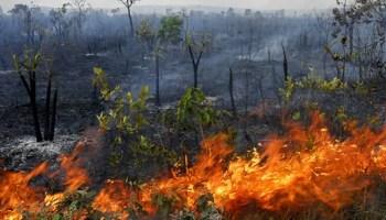 Resultado de imagem para queimada na amazônia