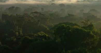 Programa Floresta+ terá R$ 500 milhões para proteger mata nativa da Amazônia