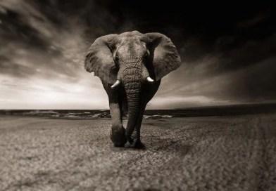 Homem destruiu 83% de todos os mamíferos selvagens, revela estudo