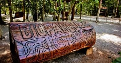 Após 20 anos fechado, Bioparque da Amazônia é reaberto em Macapá