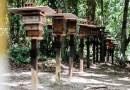 Meliponário no Bioparque da Amazônia atuará como espaço de educação ambiental