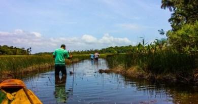Trilhas terrestres e aquáticas serão atrações do Bioparque da Amazônia