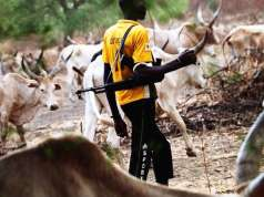 Fulani Herdsmen attack Ondo council workers, chase them out of secretariat