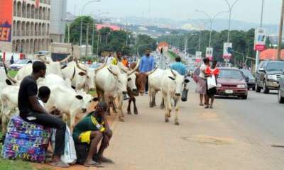 Police gives reason why they won't arrest herdsmen grazing cattle on airport runways