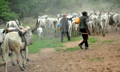 Herdsmen killing, sacking Oyo communities – Group raises fresh alarm