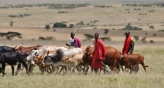 16 reportedly killed as suspected herdsmen carry out reprisal attack for their stolen cows in Benue