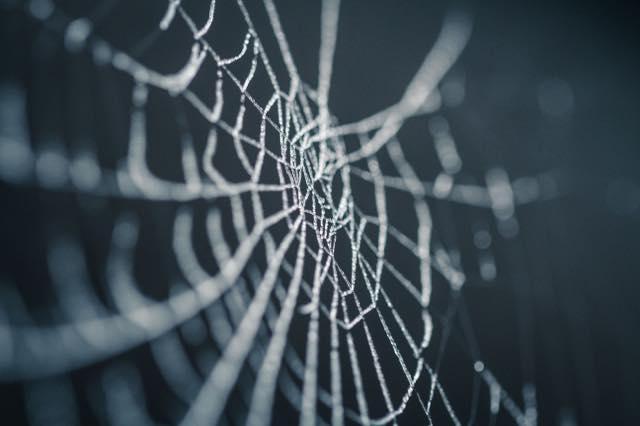 蜘蛛の巣の対策スプレー