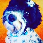 Echo Huang Puppy