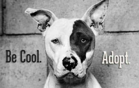 Les bâtards, plus résistants que les chiens de race ?