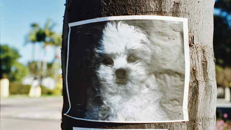Que faire quand on croise un chien « perdu » ?