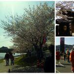 萌様道中と姫様道中。あなたはどっちにする?気賀関所桜スポット