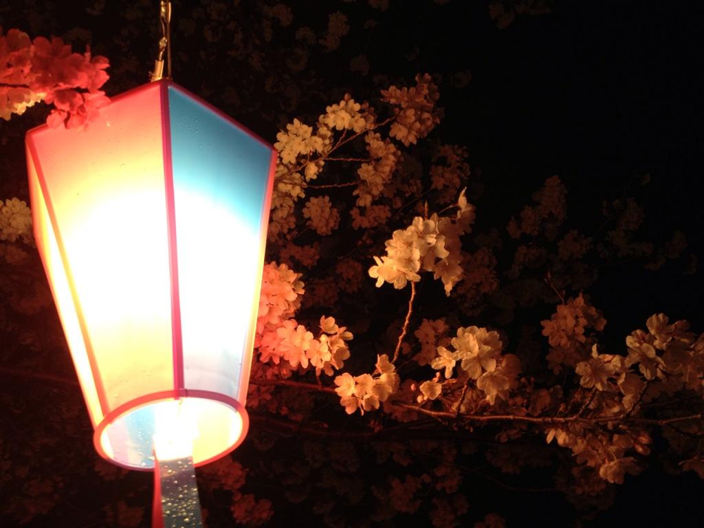 向山緑地桜2