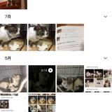 Googleフォト猫検索