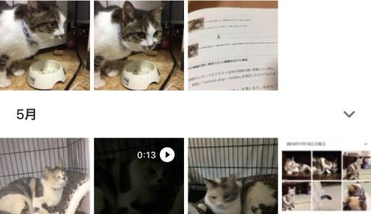 googleフォトで猫検索をしてみた