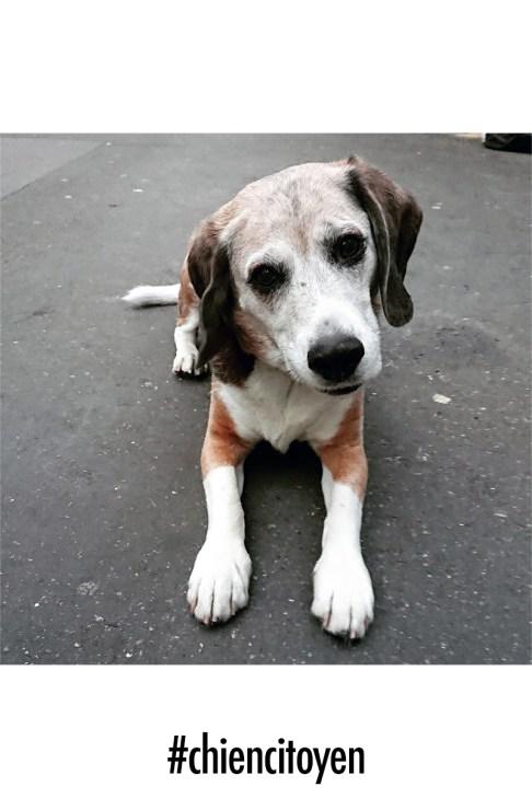 beagleCharlie