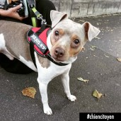 Bounty Terrier bresilien Paris 19