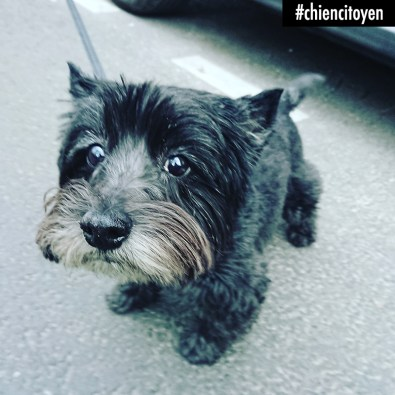 CairnTerrierParis7
