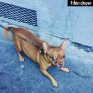 ChihuahuaParis19