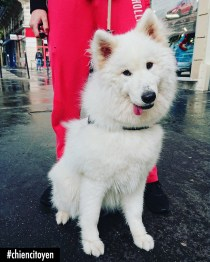 HappySamoyedeParis11