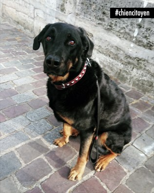 Romy, beauceron de Paris