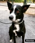 Sammy, Grigri du 17ème arrondissement de Paris