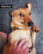 Stan, chien Créole du 17ème arrondissement