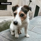 DaguetJackRussellParis2