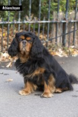 FuegoCavalierKingCharlesParis15