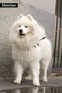 AsgardSamoyedeParis19