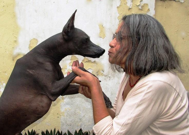 « ... parce que je crois que la langue fait partie de notre culture et qu'elle ne peut pas être isolée des autres éléments culturels comme le chien », explique Gloria Caceres Vargas (professeure, écrivaine et traductrice de langue quechua) à l'Association pour la protection du patrimoine péruvien APPP, dans une interview à la Faculté des Sciences Sociales de l'Université Nationale à Trujillo en octobre 2017. Sur la photo: Luna Pelota et Gloria Cáceres Vargas - photo de Patricia Cáceres Murga (propriétaire de Luna Pelota).