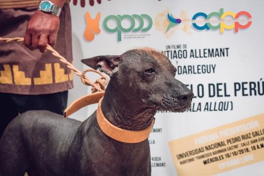 « Killa » (Perro sin pelo del Perú – hembra) ejemplar del Museo Brüning – Lambayeque. Photo by Favio Jordi Martínez Nuntón / appp – adpp ©2018 / Art design by Alessandro Pucci.