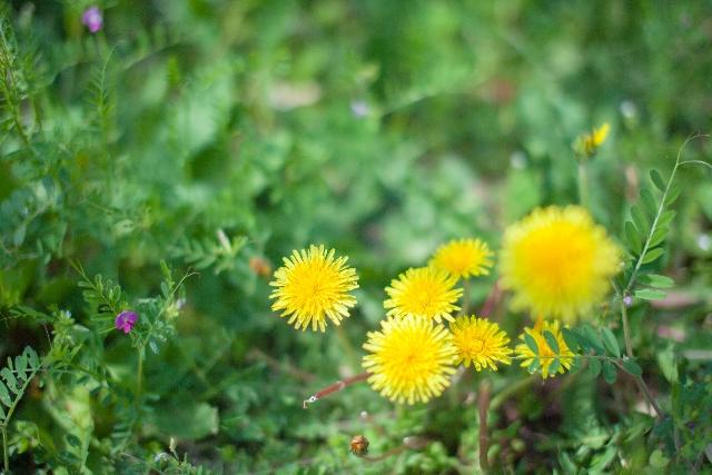 庭の雑草 除草剤のまき方