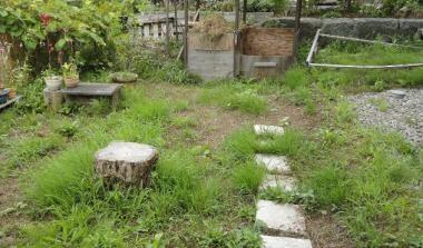 雑草の生えた庭