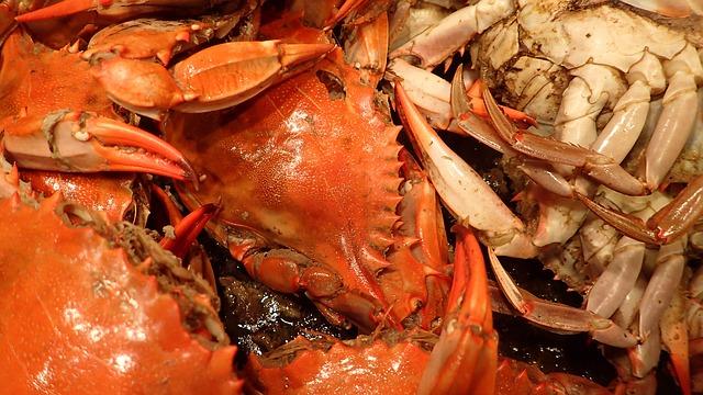 crab-1013026_640