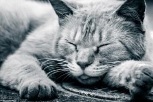 泥酔した猫