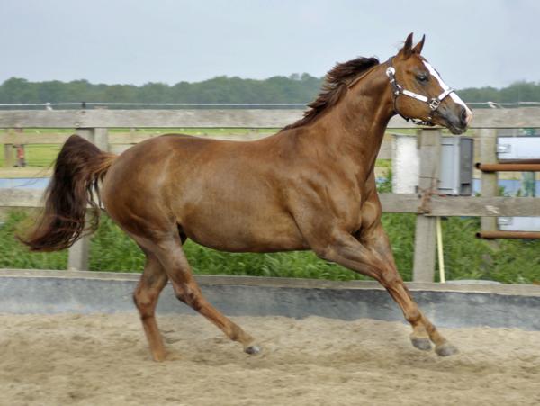 Jacqie racen
