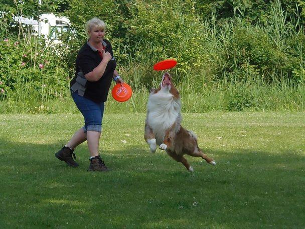 Dogfrisbee Wedstrijd