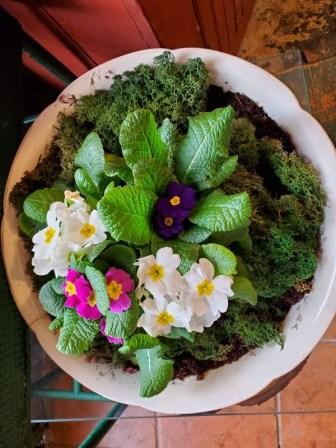 antique wash bowl with primroses