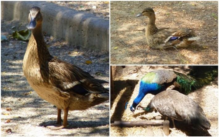 faune-parc-des-oiseaux.jpg