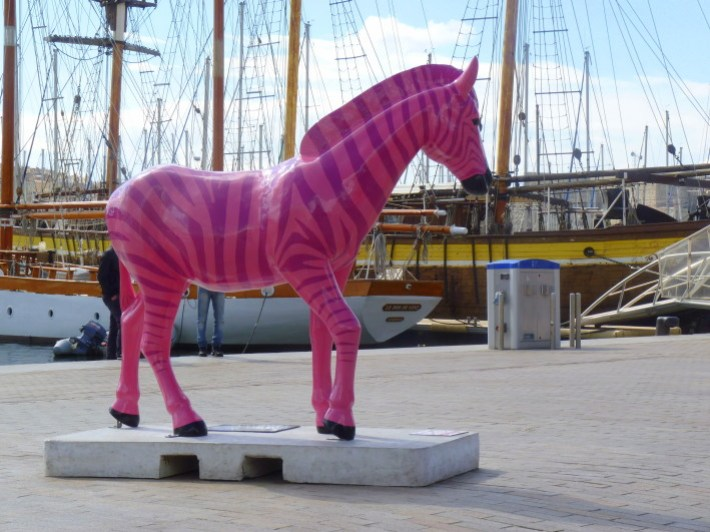 zebre rose