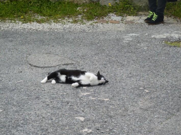 the cat bis