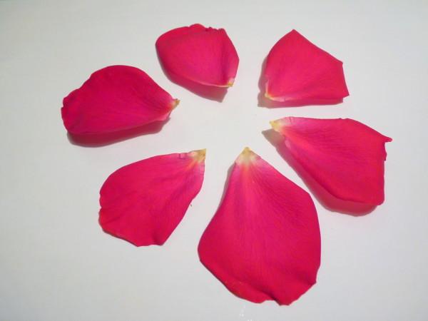 pétales-de-rose