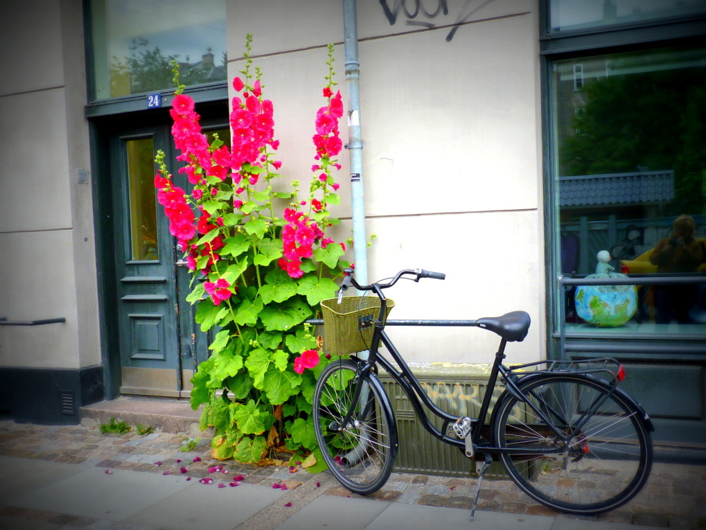 Album - Copenhague-juillet-2013