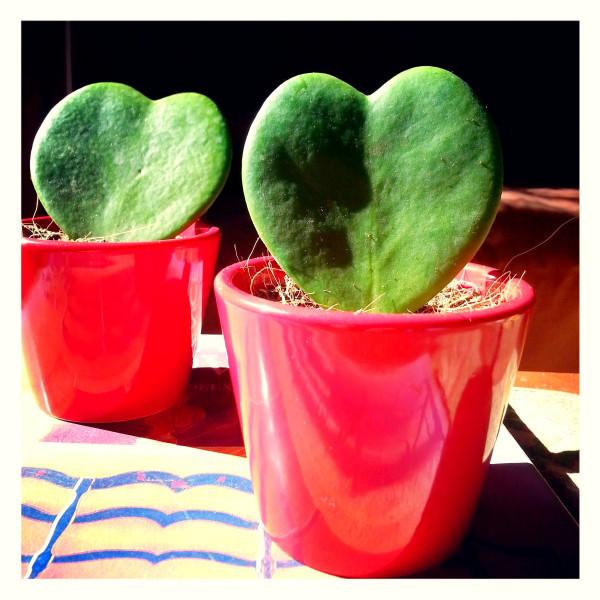 heart-plant-copie-1.jpg